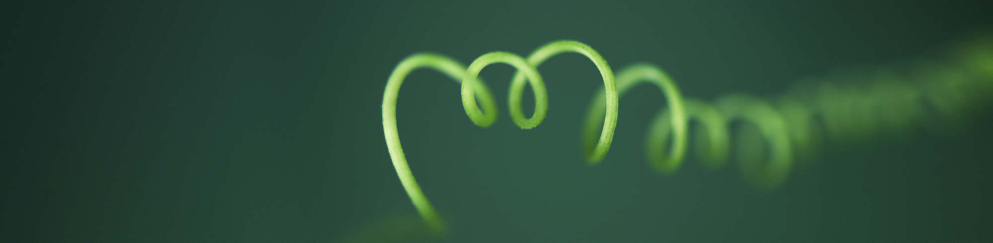 online rouwbegeleiding